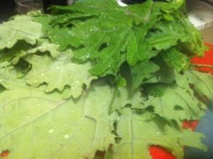 Intimidating flat-leaf kale, whatever it is.
