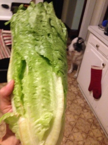 Romaine. Caesar. It just makes sense. Even the puppy sous-chef agrees.